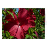 Hibiscus Flower and Blue Sky Summer Nature Photo Card