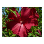 Hibiscus Flower and Blue Sky Summer Nature Photo Postcard