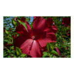 Hibiscus Flower and Blue Sky Summer Nature Photo Poster