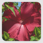 Hibiscus Flower and Blue Sky Summer Nature Photo Square Sticker