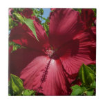 Hibiscus Flower and Blue Sky Summer Nature Photo Tile