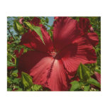 Hibiscus Flower and Blue Sky Summer Nature Photo Wood Wall Art