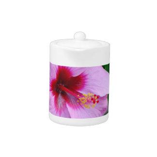 Hibiscus Flower Blossom
