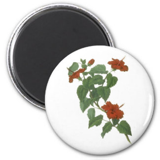 Hibiscus Flower Botanical Drawing 2 Inch Round Magnet