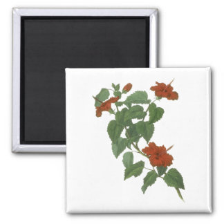 Hibiscus Flower Botanical Drawing 2 Inch Square Magnet