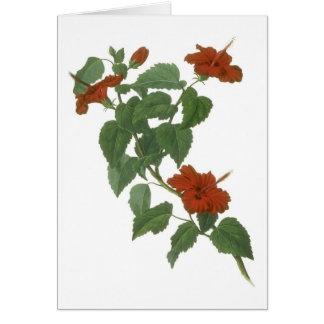 Hibiscus Flower Botanical Drawing Card