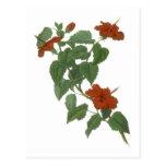 Hibiscus Flower Botanical Drawing Postcard