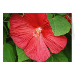 Hibiscus Flower Bright Magenta Floral Card