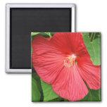 Hibiscus Flower Bright Magenta Floral Magnet