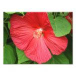 Hibiscus Flower Bright Magenta Floral Photo Print