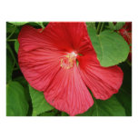 Hibiscus Flower Bright Magenta Floral Poster