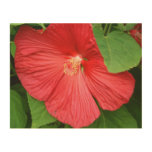 Hibiscus Flower Bright Magenta Floral Wood Wall Art