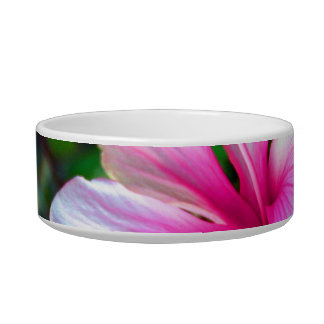 Hibiscus flower bright pink against green cat bowl
