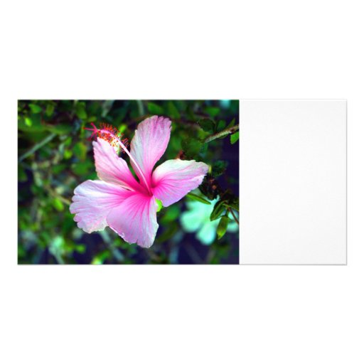 Hibiscus flower bright pink against green photo card template