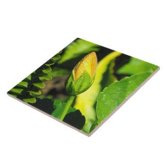 Hibiscus Flower Bud Ceramic Tile
