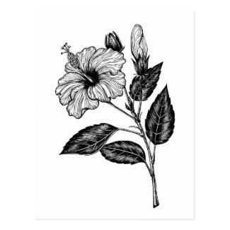 Hibiscus flower III Postcard