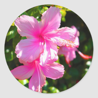 Hibiscus Flower Pink Sticker