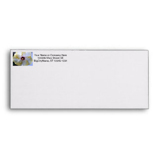 hibiscus flower white yellow center picture envelopes