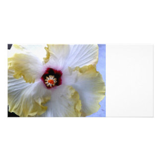 hibiscus flower white yellow center picture custom photo card