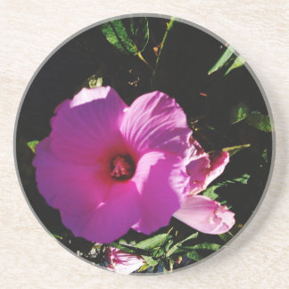 Hibiscus Hawaii Party Coaster 2