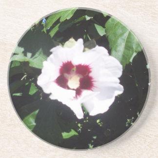 Hibiscus Hawaii Party Coaster 6