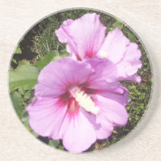 Hibiscus Hawaii Party Coaster 8