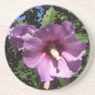 Hibiscus Hawaii Party Coaster 9