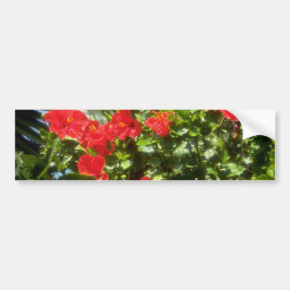 Hibiscus hedge, Spain flowers Car Bumper Sticker