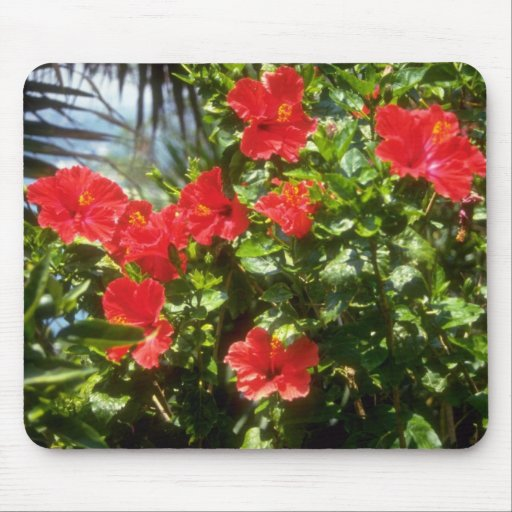 Hibiscus hedge, Spain flowers Mouse Pad