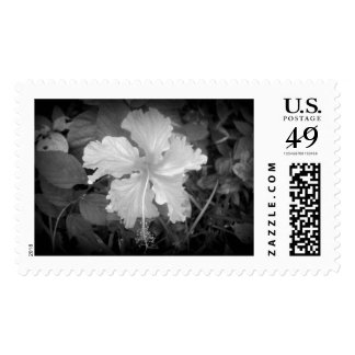 Hibiscus in Black and White Postage
