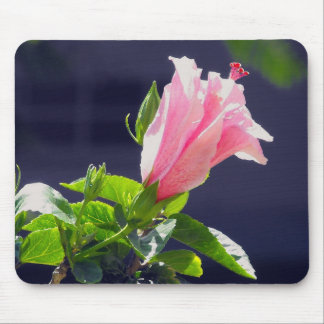 Hibiscus in Bright Sunlight Mouse Pad