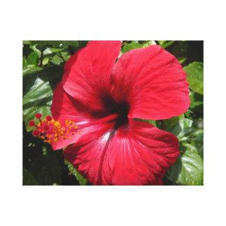 Hibiscus in weinrot gespannter galeriedruck