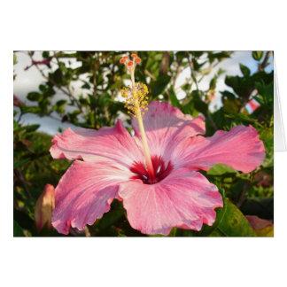 Hibiscus - L Greeting Card