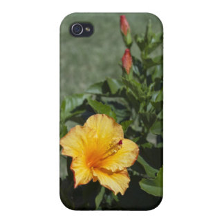 Hibiscus Life Cycle iPhone 4 Case