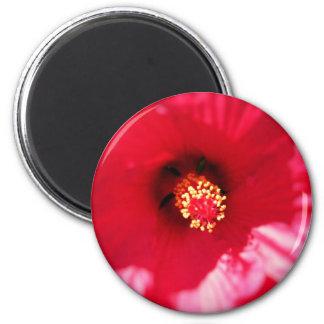 Hibiscus Macro Magnet