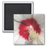 Hibiscus - Magnet