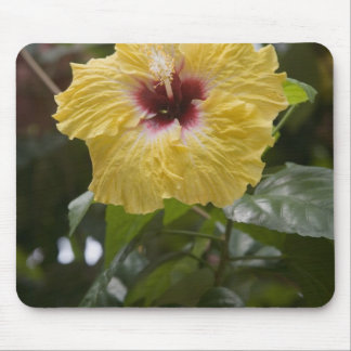 Hibiscus, Moorea, French Polynesia Mouse Pad
