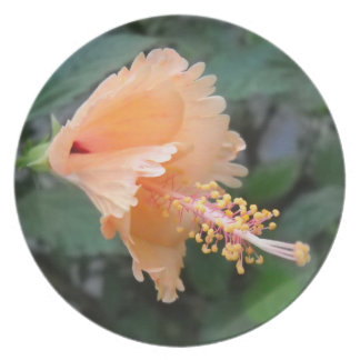 Hibiscus Morning Glory Melamine Plate