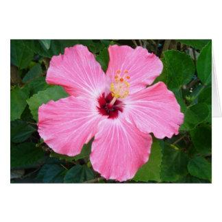 Hibiscus - N Card