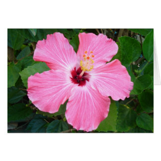 Hibiscus - N Cards