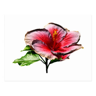 Hibiscus Night Fire Postcards