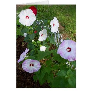 Hibiscus notecard, variety card