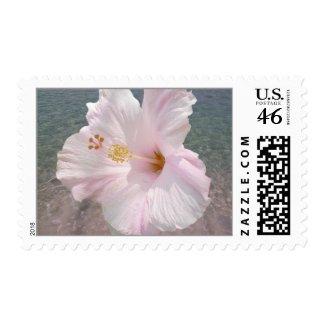 Hibiscus & Ocean Water stamp