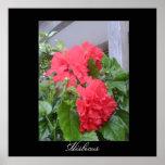 Hibiscus of the Antilles Print