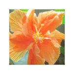 Hibiscus Orange Flower Stretched Canvas Print