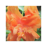 Hibiscus Orange Garden Canvas Prints