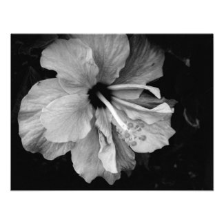 Hibiscus Personalized Announcements