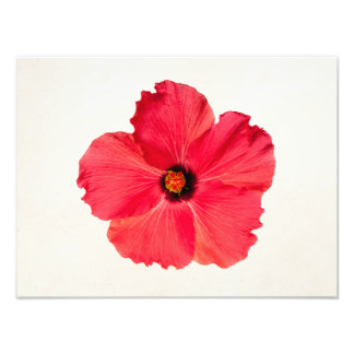 Hibiscus - Personalized Tropical Hot Pink Flower Photo Print
