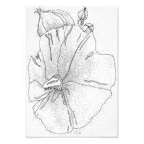 Hibiscus Photo Print