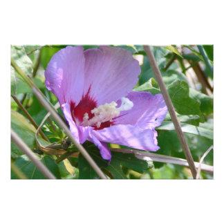 Hibiscus Photographic Print
